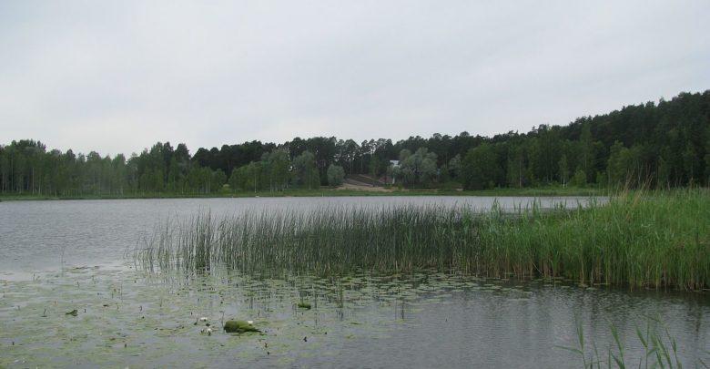 Arbi järv