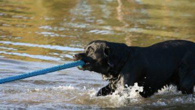 Photo of Lugeja küsib: Kus võib ja kus ei või Elvas koeraga ujuma minna?