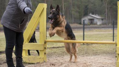Photo of Elvas avati MTÜ Elva Elama poolt rajatud koertepark