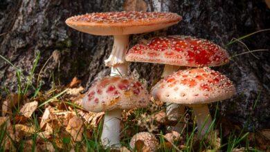 Photo of Vapramäe loodusmaja kutsub seenele!